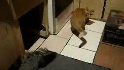 Том и Джерри: реальность смотреть видео прикол - 0:08