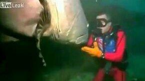 Смотреть Гигантская рыба и дайвер