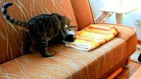 Смотреть Заводной смешной котёнок