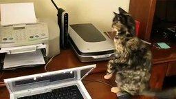 Смотреть Кота замыкает