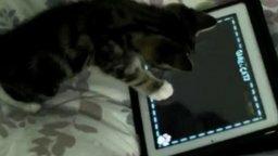 Смотреть Котёнок и планшетный компьютер