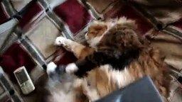 Хороший способ выловить у кота блох смотреть видео прикол - 0:49