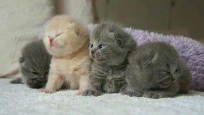 Смотреть Сонные малыши-котята