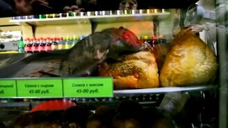 Смотреть Крыса на витрине киоска