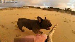 Бульдог на пляже смотреть видео прикол - 0:23