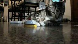 Самый дрессированный кот смотреть видео прикол - 2:10