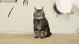 Смотреть Реальный кот-росомаха!