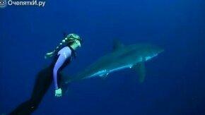 Смотреть Девушка-водолаз плавает с белой акулой