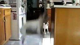 Нетерпеливая собачка смотреть видео прикол - 1:12