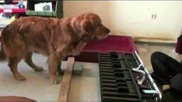 Смотреть Собака с совершенным слухом