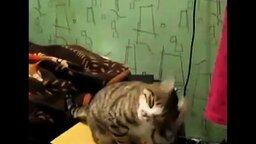 Смотреть Мастер-класс от кота