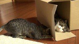 Смотреть Мару, Хана и коробка