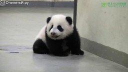 Смотреть Панда укладывает своего малыша спать