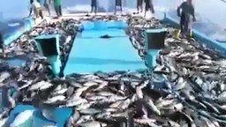 Смотреть Чудо-рыбалка