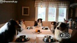 Смотреть Собаки, которые молятся перед едой