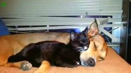 Дружественные собаки и кошки смотреть видео прикол - 2:49