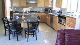 Псина хозяйничает на кухне смотреть видео прикол - 2:38