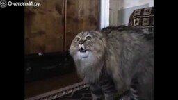 Гитлер против кота смотреть видео прикол - 1:29