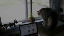 Смотреть Слабонервный котяра