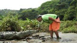 Смотреть Кормёжка дикого крокодила