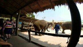 Смотреть Танец слона-циркача