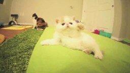Смешной и игривый котёнок смотреть видео прикол - 1:05