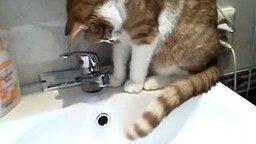 Культурный кот смотреть видео прикол - 2:41