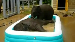 Смотреть Слоники наслаждаются купанием
