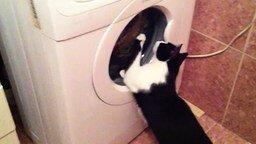 Смотреть Кот старательно стирает