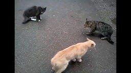 Смотреть Восточные коты-каратисты
