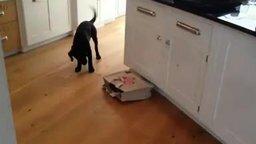 Смотреть Пёс против загадочного пакета