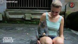 Смотреть Самые наглые обезьяны