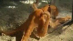 Смотреть Компактный и гибкий осьминог