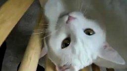 Разговор с кошкой смотреть видео прикол - 1:07