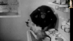 Смотреть Обезьяна искупала кота