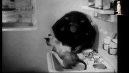Обезьяна искупала кота