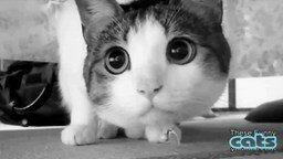 Смотреть Весёлые танцующие кошки