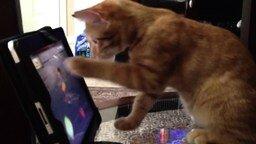Кошки играют во Фруктового ниндзю смотреть видео прикол - 2:33