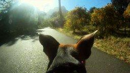 Смотреть Жизнь собаки от первого лица