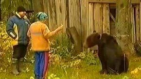 Глупая женская затея с медведем смотреть видео прикол - 0:59