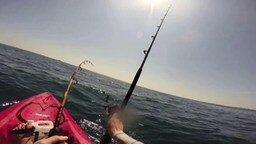 как ловить акулу на спиннинг