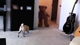 Смотреть Мопс против медведя