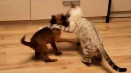 Вечерняя битва котёнка и щенка смотреть видео прикол - 2:23