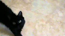 Смотреть Кошачье непостоянство