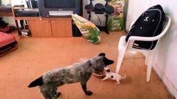 Смотреть Моя миска, уйди прочь!