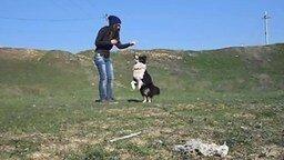 Смотреть Девочка дрессирует пса