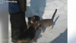 Смотреть Кошки-чудики в нарезке