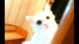 Смотреть Паранормальный котяра
