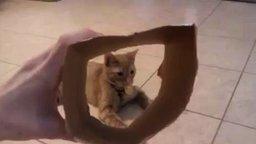 Смотреть Хозяйка играет с котом