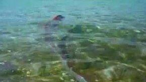 Удивительная рыба у берегов Мексики смотреть видео прикол - 2:02